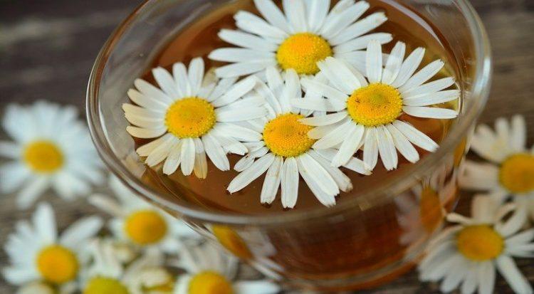 elenco-piante-medicinali