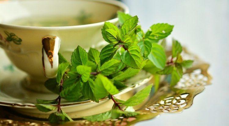 erbe-e-piante-curative-elenco-completo
