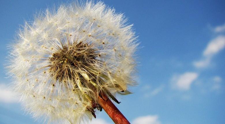 erbe-officinalis-quali-sono